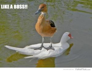 -like-a-boss-_20120518082958